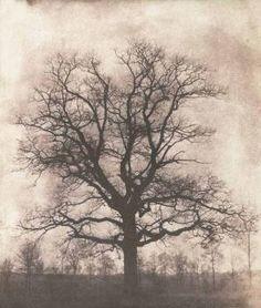 An oak tree in winter - 1842-43