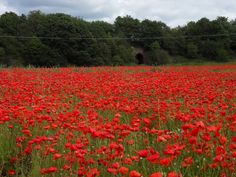 The Poppy Field at Bewdley.  I adore this place.  The field is filled as far as the eye can see with red poppies.  This picture does not do the scene justice. Stunning place.