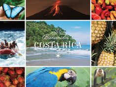 From above the treetops in Arenal National Park to within the Tenorio River rapids, adventure is waiting in Central America on our Costa Rica vacation!