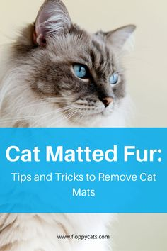 Cat matted fur can be a real problem for cats and their owners. If your cat is particularly sensitive to brushing or clipping it can be difficult to keep the mats at bay. There are other solutions for your kitty though, you just need to find what works for you and your pet. If you're struggling with matted fur on your cat, have a look at some of these great options for cat grooming. #catcare #grooming #petcare #cathealth #ragdolllove #cattips Grooming Salon, Cat Grooming, Long Haired Cats, Cat Mat, Cat Health, Cool Cats, Pet Care, Kitty, Fur