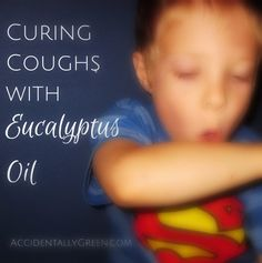 Curing Coughs with Eucalyptus Oil • Accidentally Green