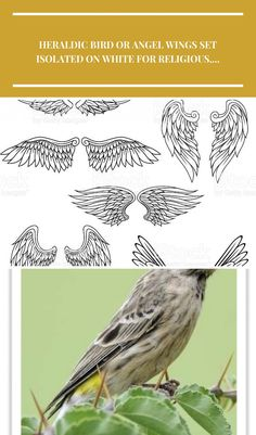 Heraldic Vogel oder Engel Flügel Satz Lizenzfreies vektor illustration bird supplies Heraldic bird or angel wings set isolated on white for religious,...