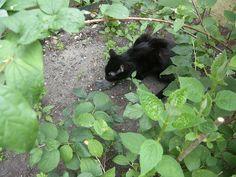 36 Environmental Enrichment For Indoor Cats Ideas Cats Indoor Cat Cat Diy