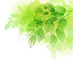 watercolour tree branch Royalty Free Stock Vector Art Illustration