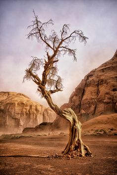 WINDSWEPT LADY (Nature) - One of the times visiting Monument Valley, Arizona, I was in a box canyon when a severe dust storm came through. This is a photo of an aged, old juniper tree. Its weather-torn skeleton has lasted sun, heat, snow, wind, and nature's elements. It's shape and outline looks as if it's an old windswept and aged lady still standing in a harsh desert climate. (Photo and caption by Dave Drost/National Geographic Photo Contest)#