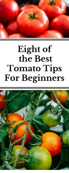 The eight best tips you need to know before growing tomatoes. I learned these after two seasons of growing and it is has dramatically changed my tomato harvests!