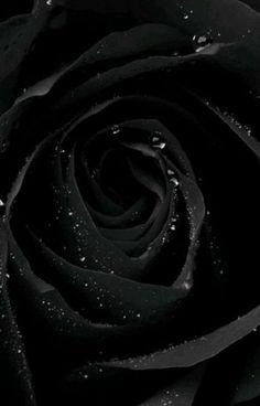 Black Iphone Background, Dark Iphone Backgrounds, Rose Background, Iphone Background Wallpaper, Flower Backgrounds, Background Ideas, Black Flowers Wallpaper, Black Wallpaper Iphone Dark, Iphone Wallpaper Images