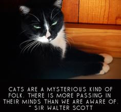 Sir Walter Scott - Cats are a mysterious kind of folk...