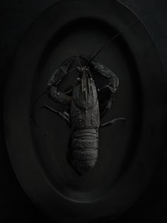 Black   黒   Kuro   Nero   Noir   Preto   Ebony   Sable   Onyx   Charcoal   Obsidian   Jet   Raven   Color   Texture   Pattern   Styling   Still Life   Matte   Photography   Crayfish