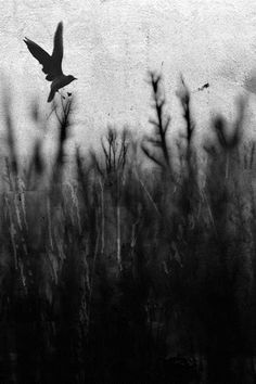 Bird above a field. Black and white photo.
