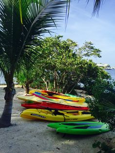 Fleet of Kayaks and Paddleboards that come with rental at Historic Shadow Point