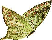 Imagenes De Mariposas Brillantes | Libro de Visitas