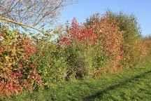 Eine Hecke Fur Den Vogelschutz Garten Hecke Pflanzplan
