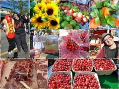 Cranberry Festival and Harvest in Fort Langley BC Canada