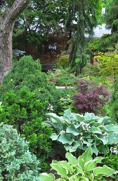 Chamaecyparis pisifera 'Boulevard' (blue) and Chamaecyparis obtusa 'Gracilis' Three Dogs in a Garden: Garden Canadensis, Part 2: Planting Combinations for Shade