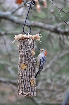 12 ideeën om de vogeltjes je tuin in te lokken voor meer woongenot | Feng-shui.nl