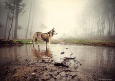 Water,rain and fog - gcarballa.carballa@gmail.com