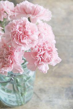 Pink Carnations In Mason Jar. Already have blue mason jars. Shabby Chic Flowers, My Flower, Pretty In Pink, Beautiful Flowers, Flower Bomb, Beautiful Things, Pink Carnations, Gerbera, Deco Floral