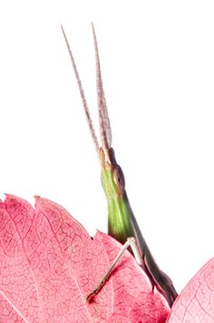 Winner of International Garden Photographer of the Year Category: Portfolio:   Paul Harcourt Davies   Wildlife in the Garden  Portfolio:  A Hidden World within 20 metres of Home  Orvieto, Umbria, Italy