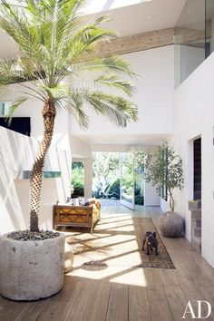 A modern entryway with reclaimed wood floors, a large palm tree, and a vintage area rug