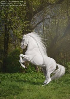 Beautiful white grey horse rearing up in a lush green field at the edge of the forest. Most Beautiful Horses, All The Pretty Horses, Animals Beautiful, Beautiful Gorgeous, Horse Rearing, Andalusian Horse, Horse Wallpaper, Majestic Horse, Horses And Dogs