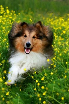 Nothing like one of these fur babies running through fresh spring grass <3