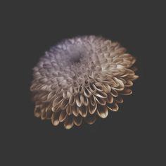 """Flower portraits"" by Viera Babecova Artistic Photography, Art Photography, Branding Design, Ux Design, Design Ideas, World Best Photographer, All Flowers, Best Photographers, Architecture Design"