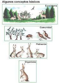 Resultado de imagen de actividades sobre ecosistemas para primaria