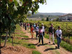 San Pietro in Cariano: Magnalonga della Valpolicella 2014 Verona, Dolores Park, San, Travel, Viajes, Trips, Tourism, Traveling