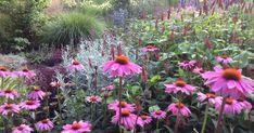 Een Piet Oudolf border op zandgrond. Is dat mogelijk? Ja, maar dan moet je wel de planten kiezen die geschikt zijn voor droge grond. Lees hier welke planten wij gekozen hebben en bekijk het resultaat. Border Design, Garden Inspiration, Gardening, Places, Flowers, Gardens, Planting Flowers, Lawn And Garden, Royal Icing Flowers