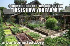 How To Urban Garden How to garden right, I so have to do this. Natural Farming, Organic Farming, Organic Gardening, Modern Agriculture, Vertical Farming, Urban Homesteading, Small Farm, Farm Yard, Urban Farming