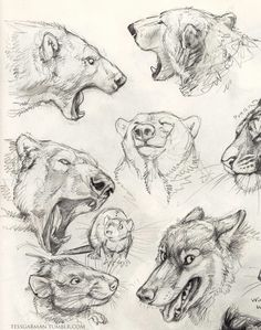 Pencil drawings of animals, animal sketches, drawing sketches, art Pencil Drawings Of Animals, Animal Sketches, Drawing Sketches, Art Drawings, Sketching, Nature Sketch, Drawn Art, Arte Sketchbook, Bear Drawing