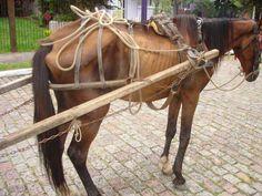 Rio -O governador Luiz Fernando Pezão sancionou a Lei 7.194/16, que proíbe o uso de animais de tração para transporte de materiais, cargas ou pessoas em charretes, carroças e demais materiais usados para tração no Estado do Rio. A norma não se aplica aos animais utilizados em áreas rurais e tur