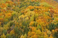 Bosque mixto caducifolio dominado por el haya y con inclusiones de coníferas. Parque Nacional de Ordesa (Huesca)