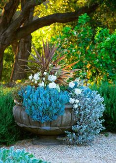 planter  urn  blue color gardening