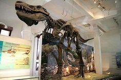 koleksi museum geologi bandung (5)