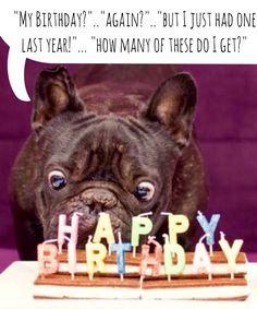 Happy Birthday Again How Many Of These Do I Get French Bulldog Birthday Card Happy Birthday French Bulldog Bulldog Happy Birthday Puppy Birthday