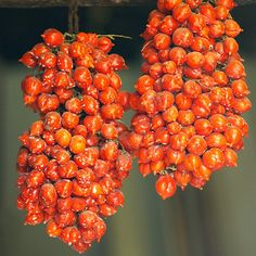 Meet the Piennolo: These Insanely Flavorful Tomatoes Might Be Better Than San Marzanos | Food & Wine