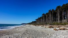 Image result for bruce bay west coast