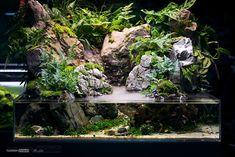 Aquarium Garden, Aquarium Landscape, Planted Aquarium, Aquarium Fish, Reptile Terrarium, Terrarium Diy, Reptile Enclosure, Reptile Cage, Aquarium Design