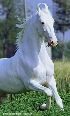 All The Pretty Horses, Beautiful Horses, Animals Beautiful, Kathiyawadi Horse, Horse Love, Horse Photos, Horse Pictures, Arte Equina, Rare Horse Breeds