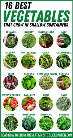Vegetables That Grow In Shallow Containers | Slick Garden