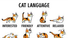 how to understand your cat better - YouTube