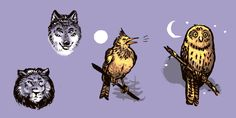 Types of sleepers: about owls, wolves and larks Night Owl, Night Time, Sleeping A Lot, Go Fit, Staying Up Late, Wide Awake, Sleep Problems, Going On Holiday, How To Wake Up Early