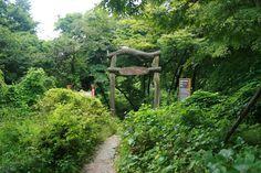 범어사 입구옆으로 난 비밀의 문. 등나무군락지가 펼쳐진다.