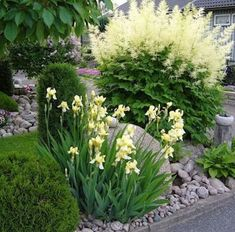 delicate yellow iris with a huge astilbe amongst stones and some conifers. Would be a nice start for a moon garden :) Pebble Garden, Moon Garden, Dream Garden, Iris Garden, Shade Garden, Cottage Garden Borders, Sloped Garden, White Gardens, Plantation
