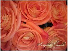 #krystalpennellphotography www.facebook.com/krystalpennellphotography
