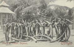 Een groep jagers in het bezit van olifantstanden Maker: fotograaf:  R. Visser Trefwoord: Centraal- en Equatoriaal-Afrikaans (cultuur) jacht Verv.jaar:ca. 1900 Verv.plaats:Centraal-Afrika, Afrika
