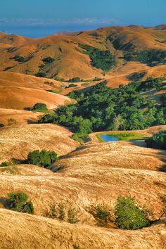 Late afternoon sun lights up the golden tones in these hills in San Luis Obispo County, California