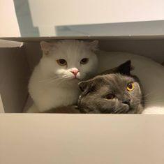 Cute Headers, Cat Aesthetic, Kawaii Anime Girl, Cute Icons, Trending Topics, Cat Memes, Cat Love, Kitten, Cat Cat